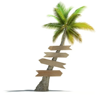 Palma z szyldami przymocowanymi do pnia na neutralnej powierzchni