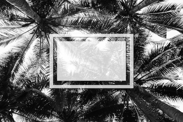 Palmowy kokosowy drzewo - monochrom