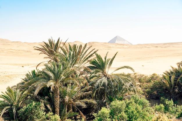 Palmy daktylowe i wydmy w tle piramidy snofru w dolinie dahshur w pobliżu gizy i kairu w egipcie.