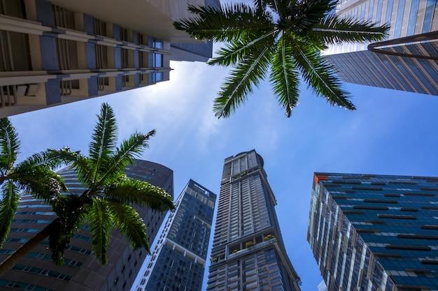 Palmy i błękitne słoneczne niebo