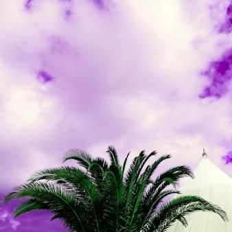 Palmy i fioletowe niebo. minimalistyczny projekt artystyczny. tropikalne surrealistyczne