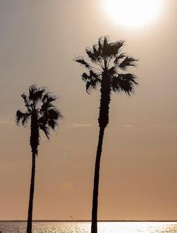 Palmy i kolorowe niebo z pięknym zachodem słońca