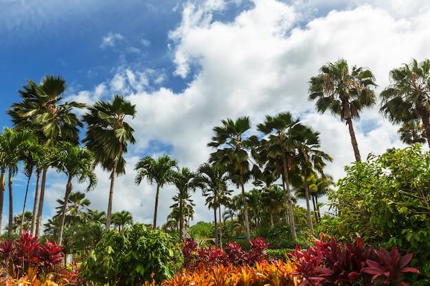 Palmy i kolorowe rośliny w tropikalnym ogrodzie i żywe błękitne niebo
