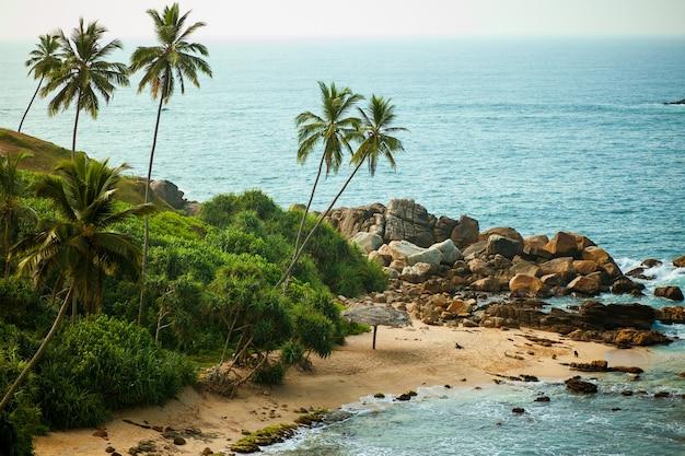 Palmy i ocean