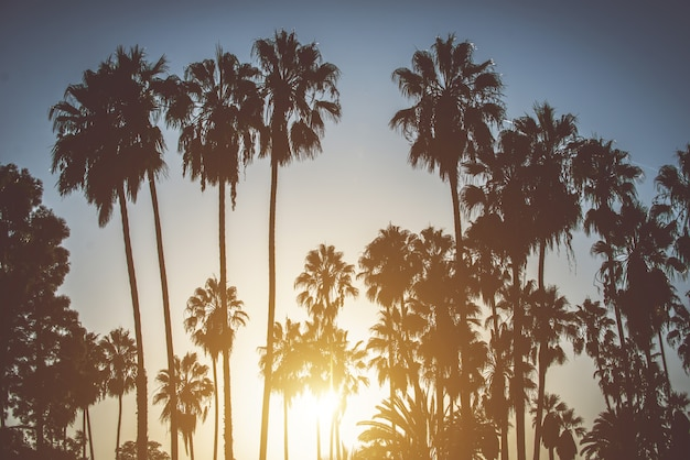 Palmy i zachód słońca w kalifornii