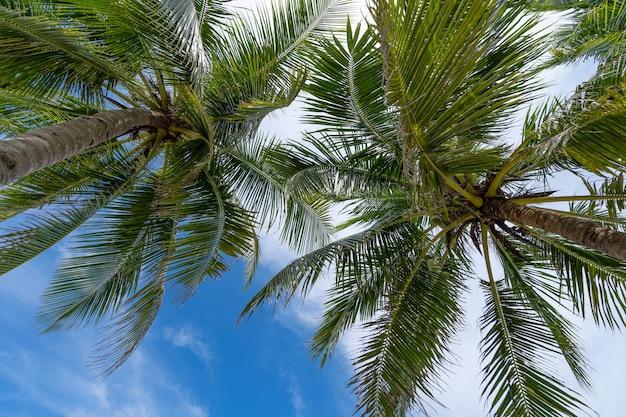Palmy kokosowe na tle błękitnego nieba i białych chmur, jak widać z dołu koncepcja tła lato i podróży.