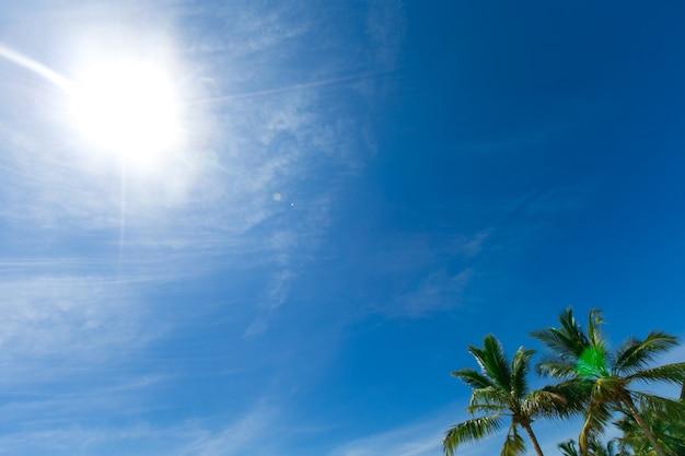 Palmy kokosowe, piękne tropikalne tło