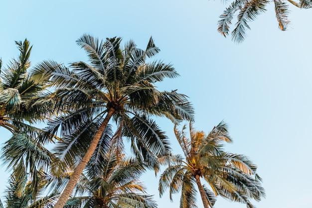 Palmy kokosowe z błękitne niebo