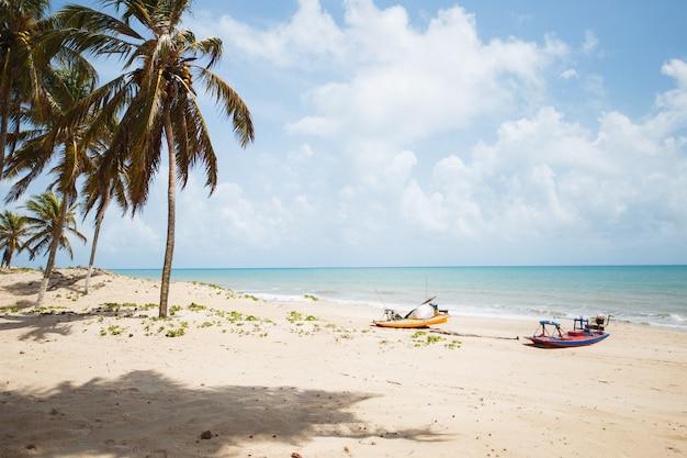 Palmy kokosowe z błękitnym niebem, piękny tropikalny tło na plaży.