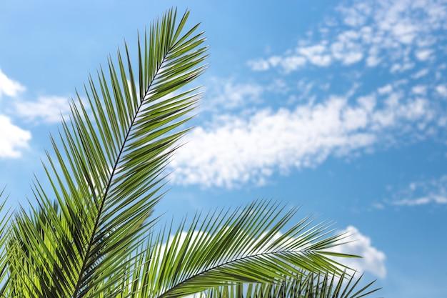 Palmy kokosowe z błękitnym niebem, pięknym tropikalnym tłem. koncepcja natury. miejsce na tekst