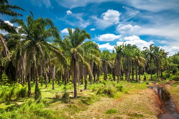 Palmy kokosowe.