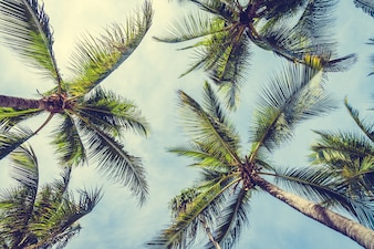 Palmy kokosowe