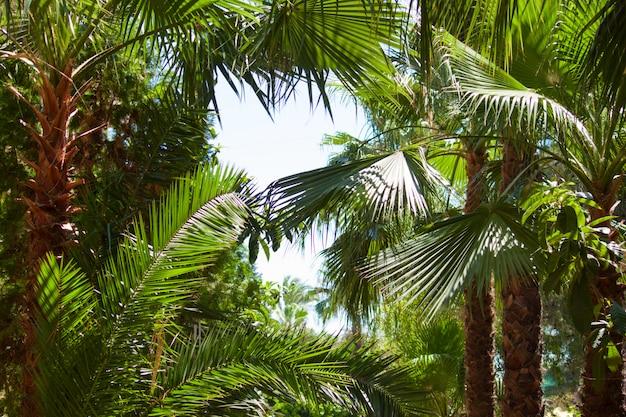 Palmy. koncepcja tropikalny wakacje. słoneczny dzień.