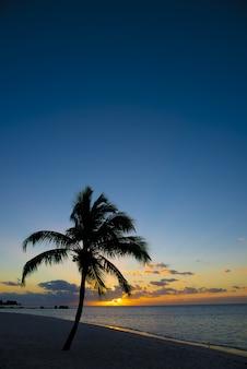 Palmy na brzegu w pobliżu plaży z pięknym niebem