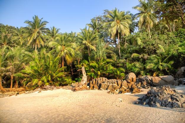 Palmy na brzegu w tropikach