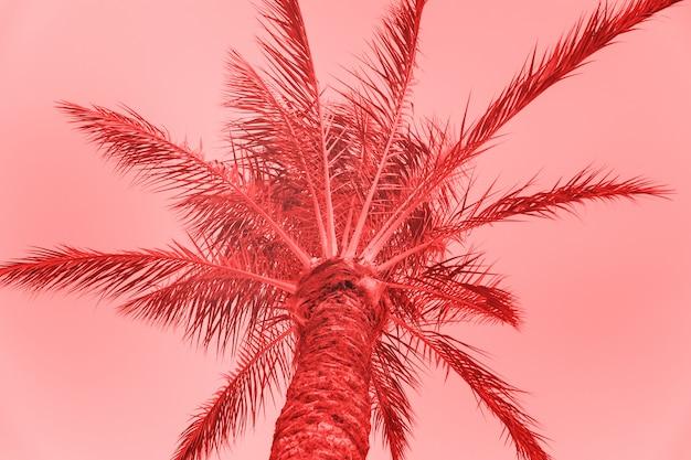 Palmy na letniej karcie stonowanych w living coral