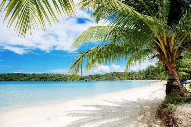 Palmy na morzu.
