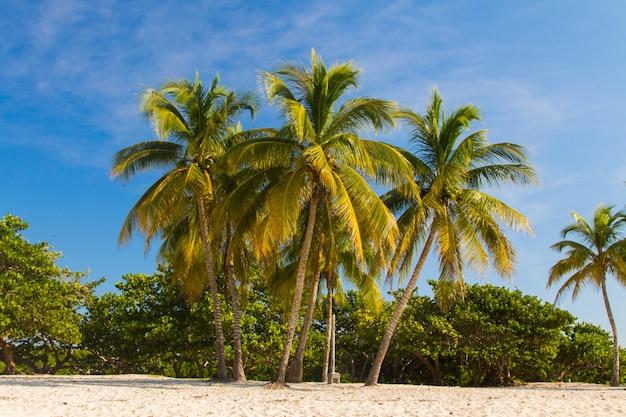Palmy na plaży krajobraz