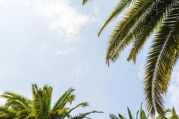 Palmy na tle błękitnego nieba, palmy na tropikalnym wybrzeżu, vintage stonowane i stylizowane, drzewo kokosowe, lato drzewo, retro