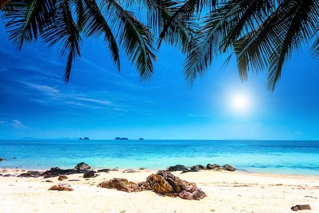 Palmy na tropikalnej plaży