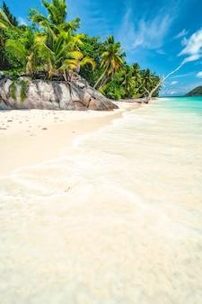 Palmy na tropikalnej zacisznej, piaszczystej plaży. błękitne niebo z białymi chmurami.