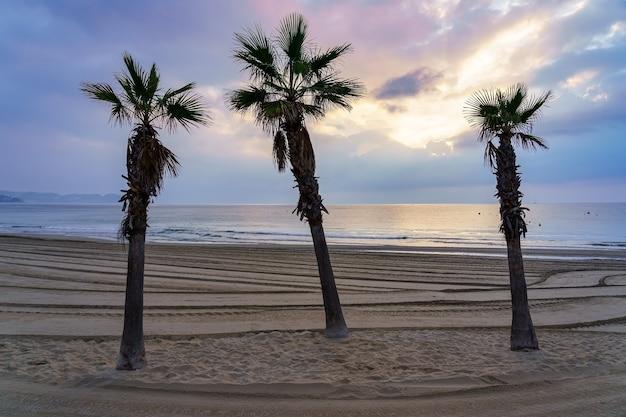 Palmy na złotej, piaszczystej plaży o zachodzie słońca w letni dzień.