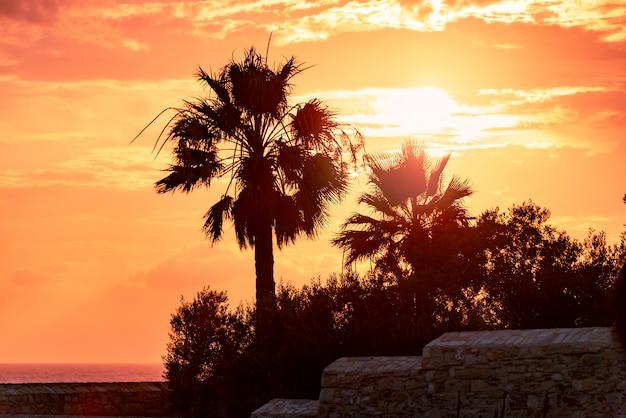 Palmy promieniują kolorowym zachodem słońca.