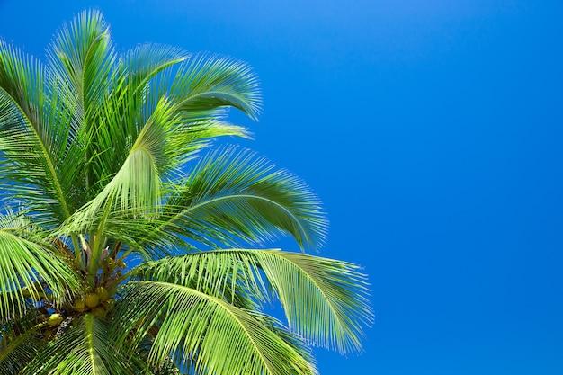 Palmy przeciw błękitne niebo. palmy na tropikalnym wybrzeżu