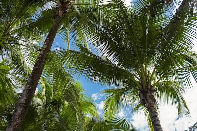 Palmy przeciw błękitne niebo. piękny tropikalny tło.