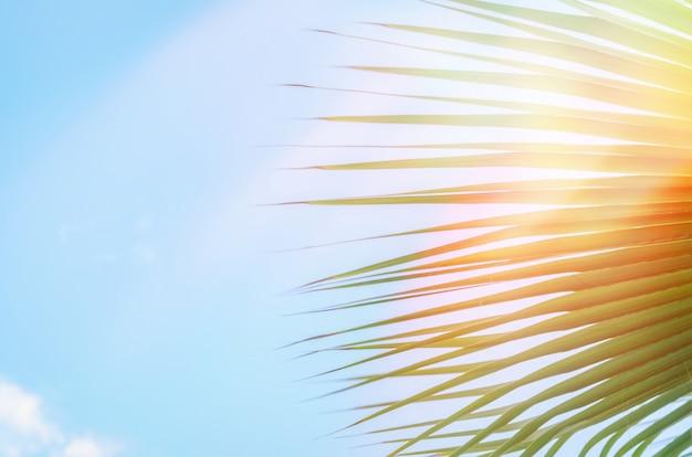 Palmy przeciw błękitne niebo