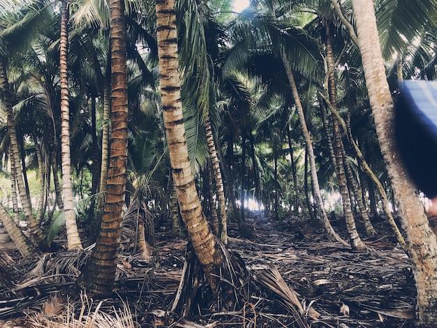 Palmy rosną obok siebie w dżungli