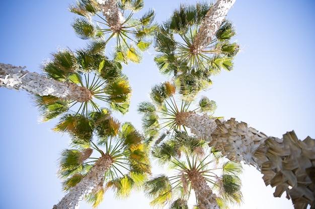 Palmy w ciągu dnia z czystym letnim widokiem na niebo od dołu