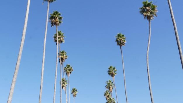 Palmy w los angeles, kalifornia, usa. lato w santa monica i venice beach. niebo i palmy.
