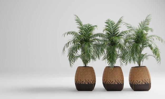 Palmy w roślinach doniczkowych