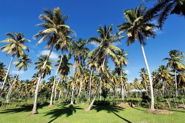 Palmy w tropikalnym ogrodzie latem