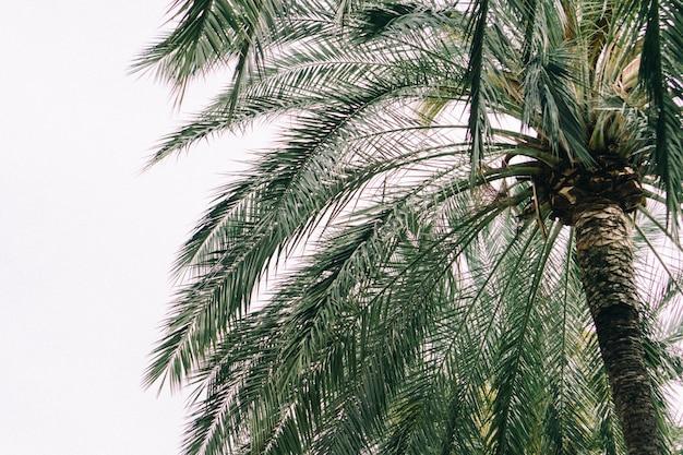 Palmy z nieba