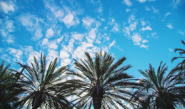 Palmy zamykają up na niebie. selektywne ustawianie ostrości.