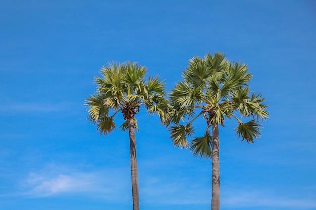 Palmy zw tle niebieskiego nieba