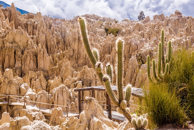 Panorama doliny księżyca z kaktusem, boliwia