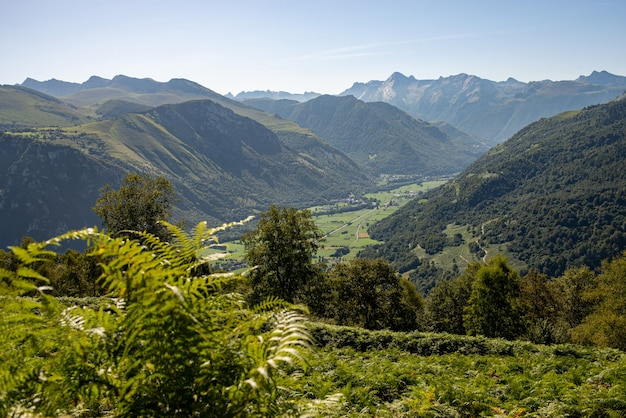 Panorama francuskich pirenejów z paprociami