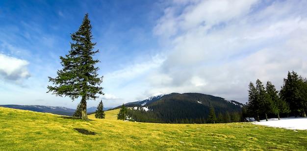 Panorama gór z dramatycznym niebem i samotną sosną