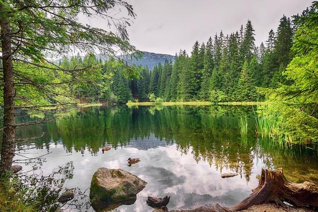 Panorama górskiego jeziora i lasu.