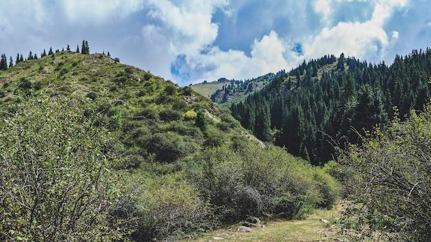 Panorama górskiej doliny latem.