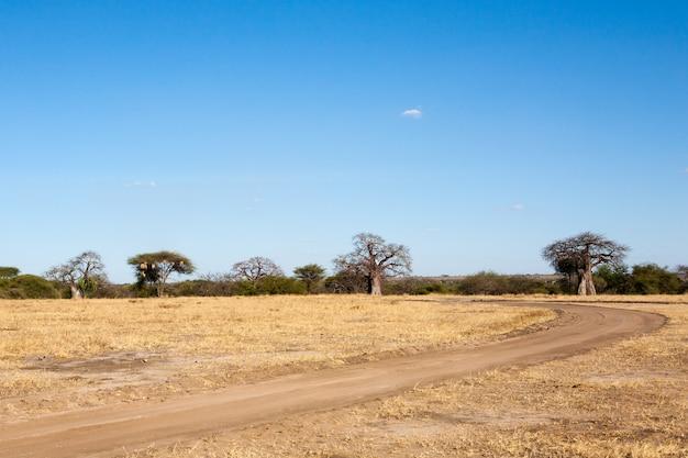 Panorama parku narodowego tarangire, tanzania, afryka. afrykańskie safari