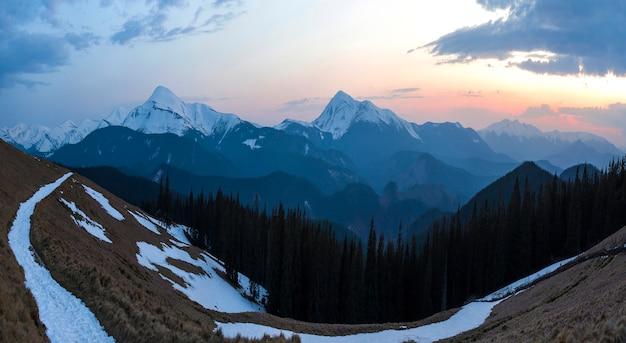 Panorama piękny wiosenny poranek w karpatach. dolina z suchą trawą i śniegiem, przezroczystym świeżym powietrzem, gęstym zimozielonym lasem i miękkim blaskiem słońca nad odległym ośnieżonym pasmem górskim.