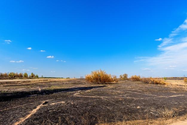 Panorama spalonego pola i lasu sosnowego na tle błękitnego nieba z chmurami.