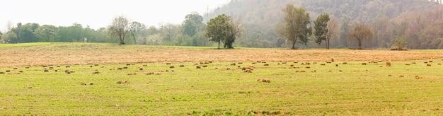 Panorama widok zieleni pola w ziemi uprawnej