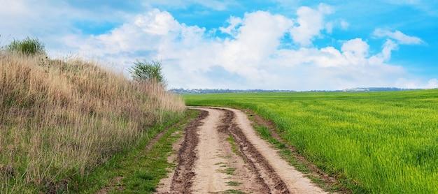 Panorama wiosennego pola z zieloną roślinnością i szeroką polną drogą w terenie.
