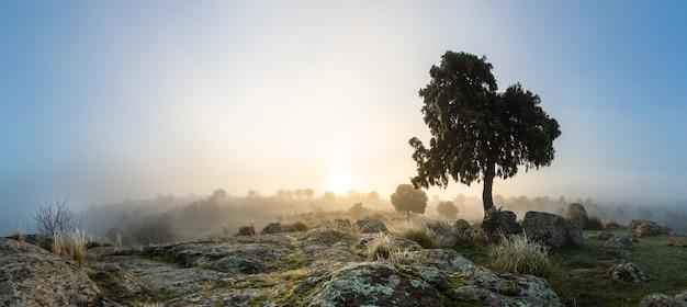 Panorama zimowego krajobrazu z omszałymi skałami na pierwszym planie a