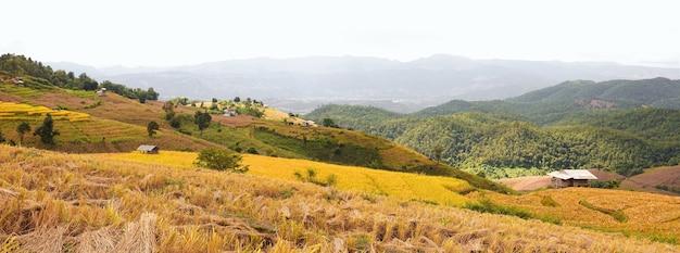 Panorama złotego pola ryżowego w wiosce pa bong piang w mae cham, chiang mai, tajlandia.
